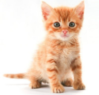cute kitten image